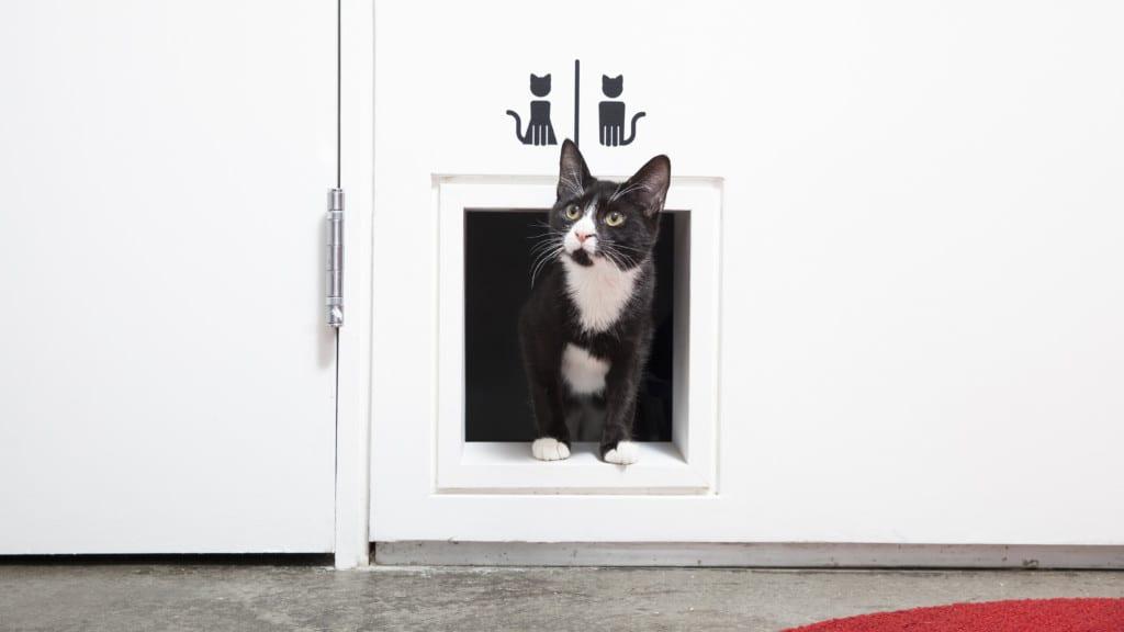 Cat in restroom
