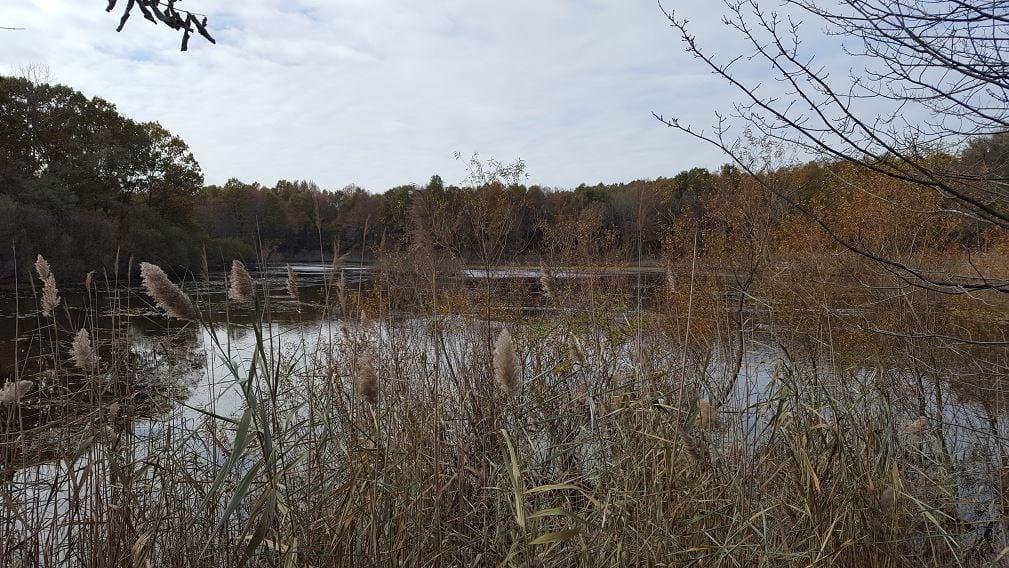 Clay Pit Ponds State Park em Staten Island, Nova York