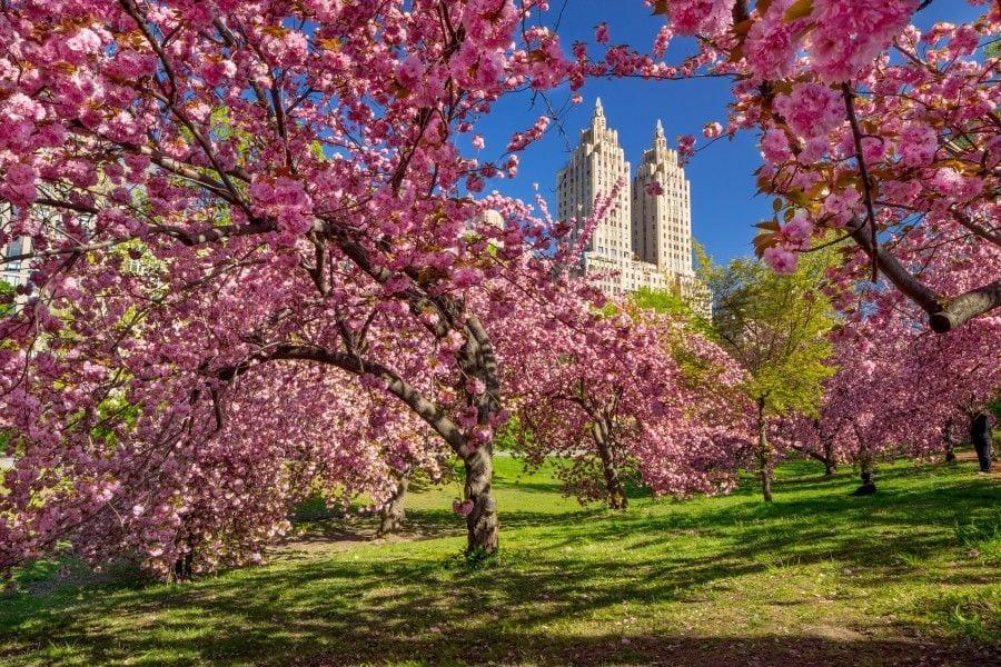 Central Park - Primavera