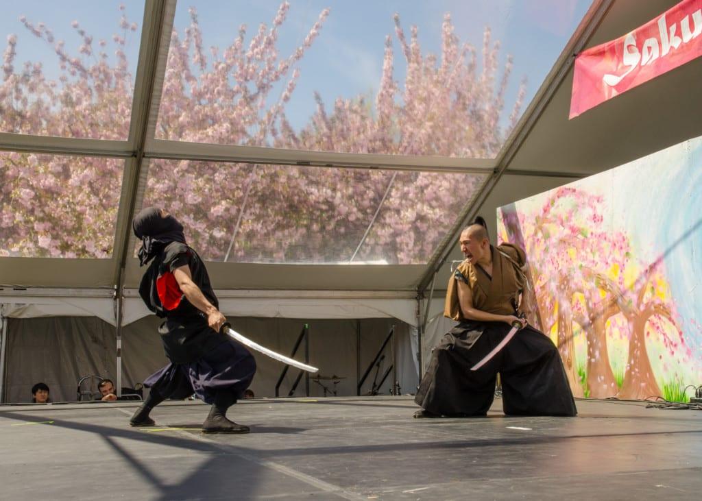 Sakura Matsuri Cherry Blossom Festival